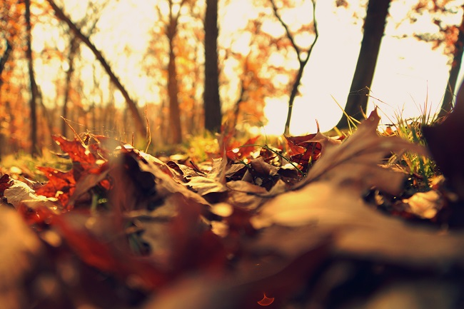The Autumn Equinox – a seasonal revival