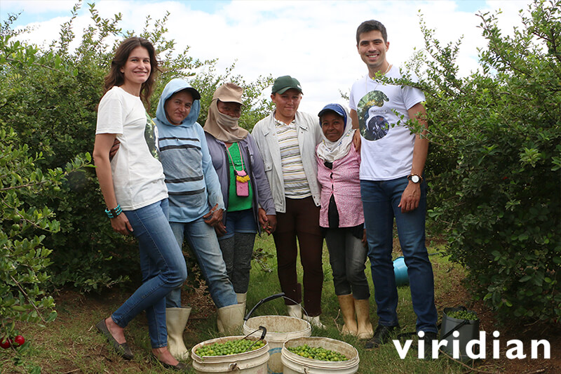 Growing Viridian's organic acerola cherry in Brazil