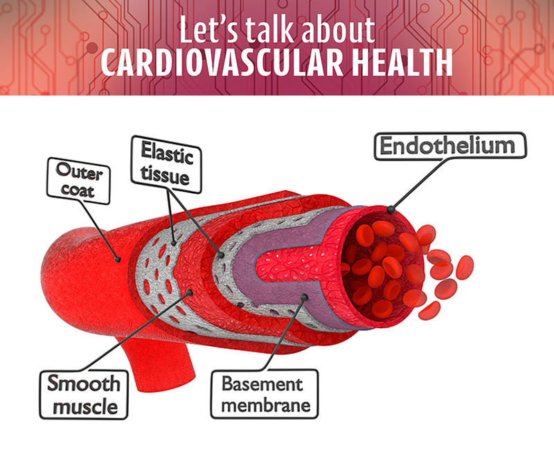 Relax and Contract: Understanding endothelial function