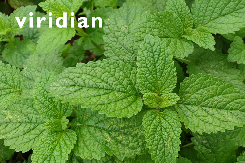 Lemon Balm for the Ageing Brain