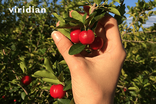 The Health Benefits of Acerola Cherry