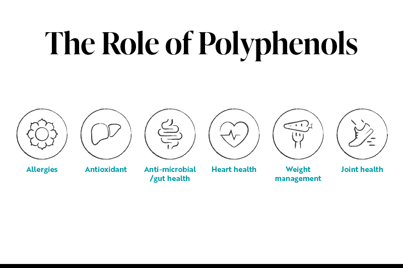 Polyphenols - a key ingredient for healthy living